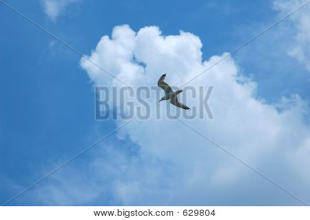 Sea gull on blue sky background poster