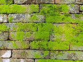 Background of old wall brick with moss poster