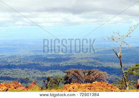 From Andes To Amazon, View Of The Tropical Rainforest, Ecuador