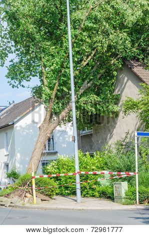 Tree Against House Gable