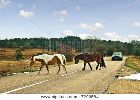 Ponies crossing the road.