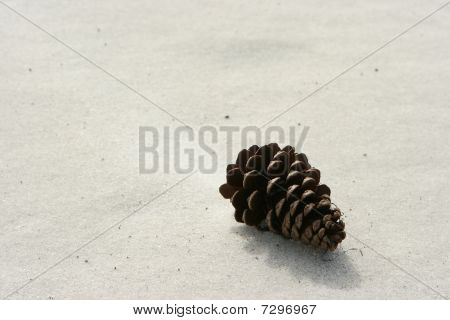 Beached Pine Cone