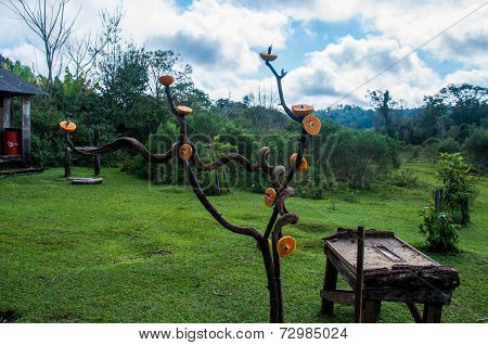 Orange On A Tree To Attract Special Birds, Misiones, Argentina