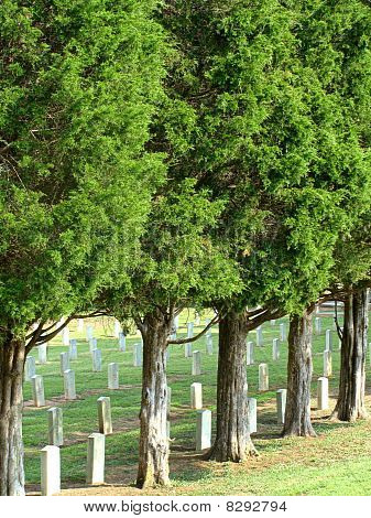 A Military Cemetary with Cedar Trees