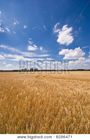 Feld und einem schönen Himmel