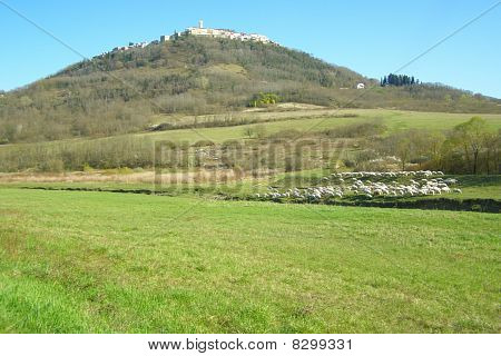 Beautiful rural landscape with green grass pastures in front focus, medieval hilltop town and sheep flock grazing across the riverbed poster