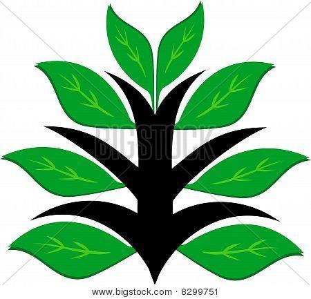 健康绿色的植物