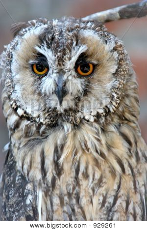 details an owl staring straight ahead in zoo poster