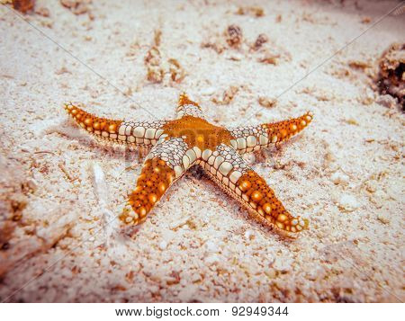 Starfish At The Bottom Of The Sea