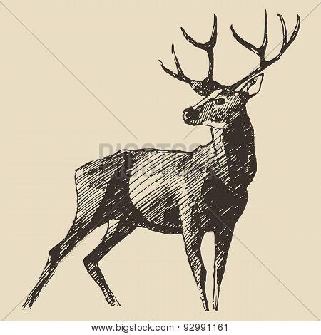Deer Engraving, Vintage Illustration, Vector