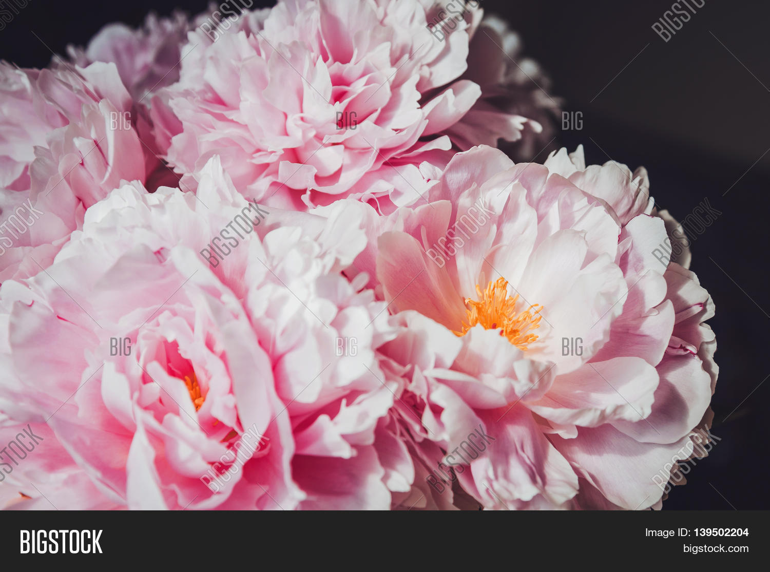 Floral Wallpaper Image Photo Free Trial Bigstock