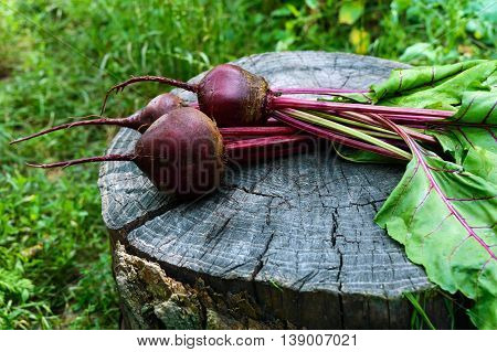 Freshly beets on an old tree stump. .
