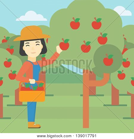 An asian female farmer holding a basket and collecting apples in fruit garden. Farmer collecting apples. Vector flat design illustration. Square layout.