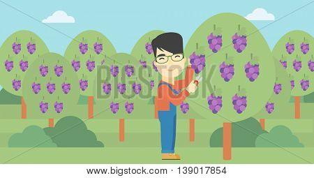 An asian farmer harvesting grapes in vineyard. Farmer collecting grapes. Young farmer working in vineyard. Vector flat design illustration. Horizontal layout.
