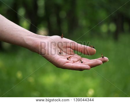 Ants on a female hand. Concept - alternative medicine treatment of folk remedies. Love of nature tranquility