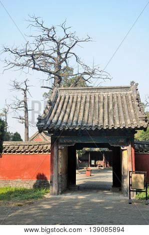 An ancient cypress tree and Chinese gate within the Confucius Temple in the city of Qufu in Shandong Province China.