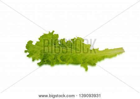 Lettuce leaves isolated on white background. One leaf.