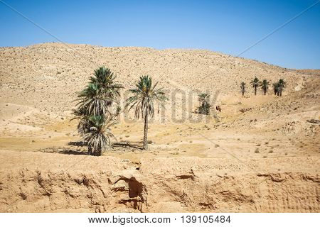 The rocky desert of Matmata with palm trees in south Tunisia. Matmata is famous for its troglodyte cave dwellings.