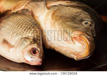 Mirror carp, crucian , fresh fish on a wooden board. Fishing concept. Concept proper nutrition.