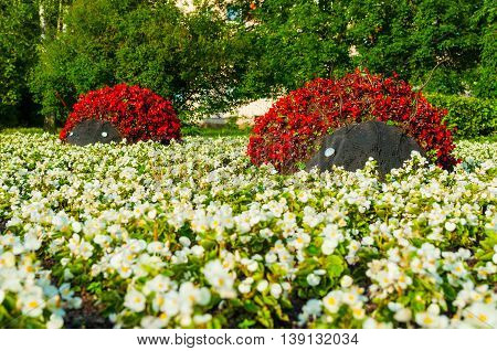 Summer park floral landscaping view - flowerbeds with landscaping elements in form of ladybirds covered with red begonia flowers. Funny landscaping with flowers in the summer park.