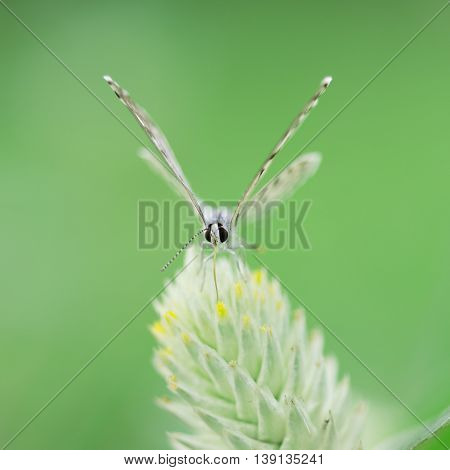 Butterfly Perching On Greem Leaves  As Background
