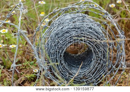 A roll of barbed wire lying in the grassBarbed wire roll