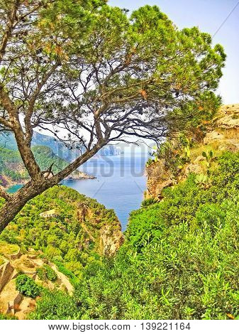 View Through Trees To Ocean, Majorca, Banyalbufar