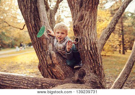 child boy climbing tree in autumn forest