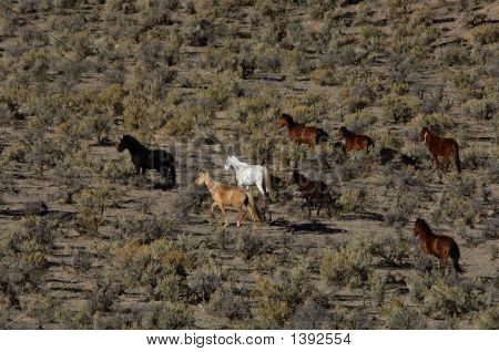 Wild Horses Running Through Sagebrush