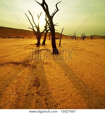 dry trees in Namib desert