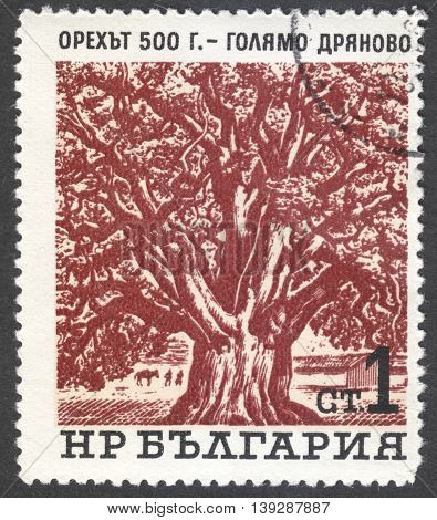 MOSCOW RUSSIA - JANUARY 2016: a post stamp printed in BULGARIA shows an old tree