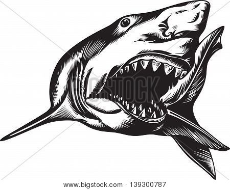 Big aggressive shark with open mouth, black and white illustration