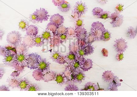 Placer of purple asters on white background. Florist workplace