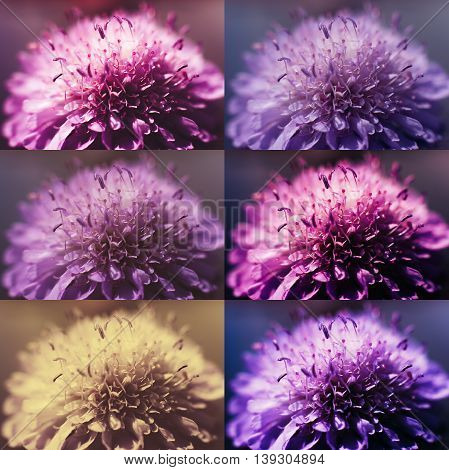 Photo processing, motley collage with asters .Photo film development, photography concept