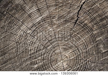 Wooden Cut Background