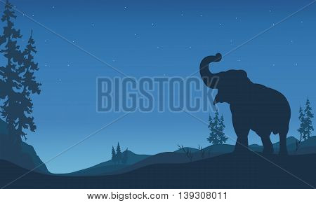 Elephant silhouettes in hill at the night