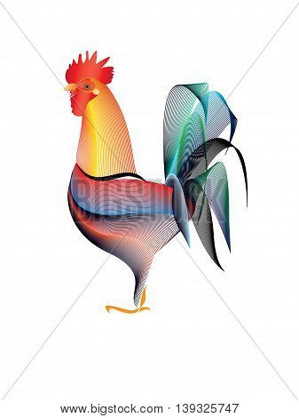 The beautiful colour rooster on white background