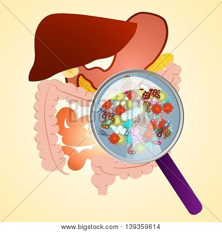 Gastrointestinal tract in gastroenterology. Taking care of the stomach and liver, and human treatment of diseases associated with it. A variety of bacteria in the stomach under a magnifying glass.