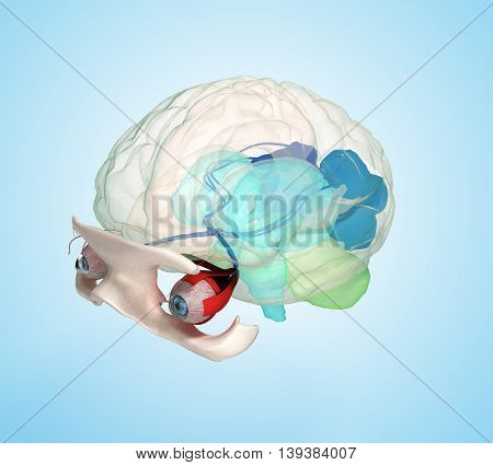 Eye Anatomy And Structure, Muscles, Nerves And Blood Vessels Of The Eyes 3D Illustration On Blue