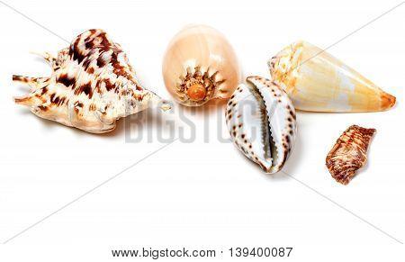 Exotic Seashells On White