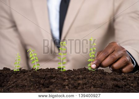 Person's Hand Planting Small Green Plant On Land