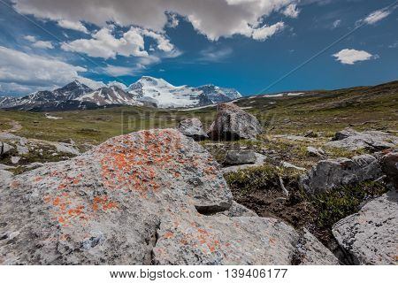 Orange Lichen Grow Upon Rocks on Wilcox Pass with Columbia Icefields in background