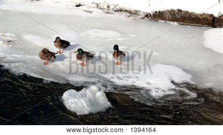 Ducks On A Frozen Lake 2