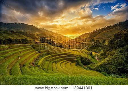 Rice fields on terrace in rainy season at Mu Cang Chai, Yen Bai, Vietnam. Rice fields prepare for transplant at Northwest Vietnam