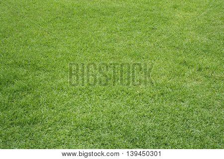green lawn background texture, grass field texture.