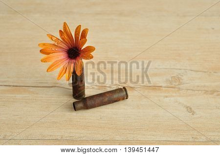 An orange daisy displayed in a rusty riffle bullet symbolizing flower power