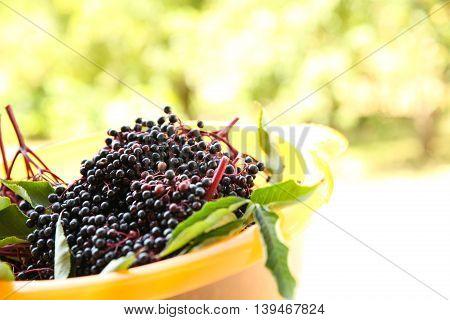 Juicy elder Berries in a bowl. Digital photo.