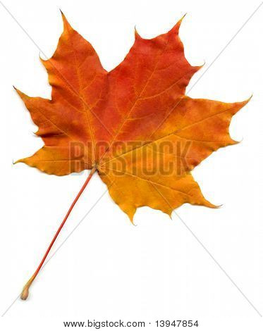 Full size photo of leaf isolated on white background