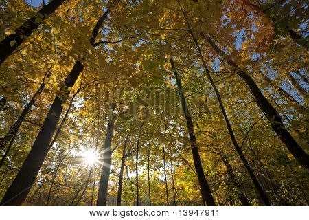 Sun Shines Behind Trees