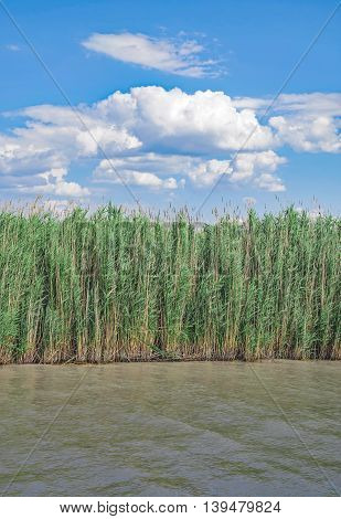 Reed Belt at Lake Neusiedl National Park in Burgenland,Austria